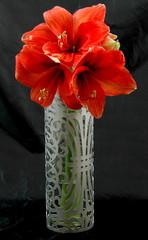 Ionic Vases