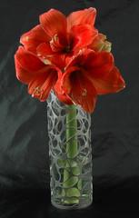 Nebula 2 Vases