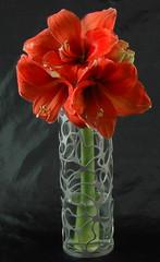 Nebula 3 Vases